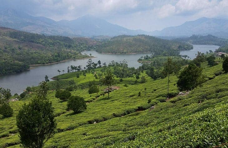 Munnar Tea Plantation – Where the clouds will come and kiss your feet